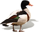dsgn_648_duck.png